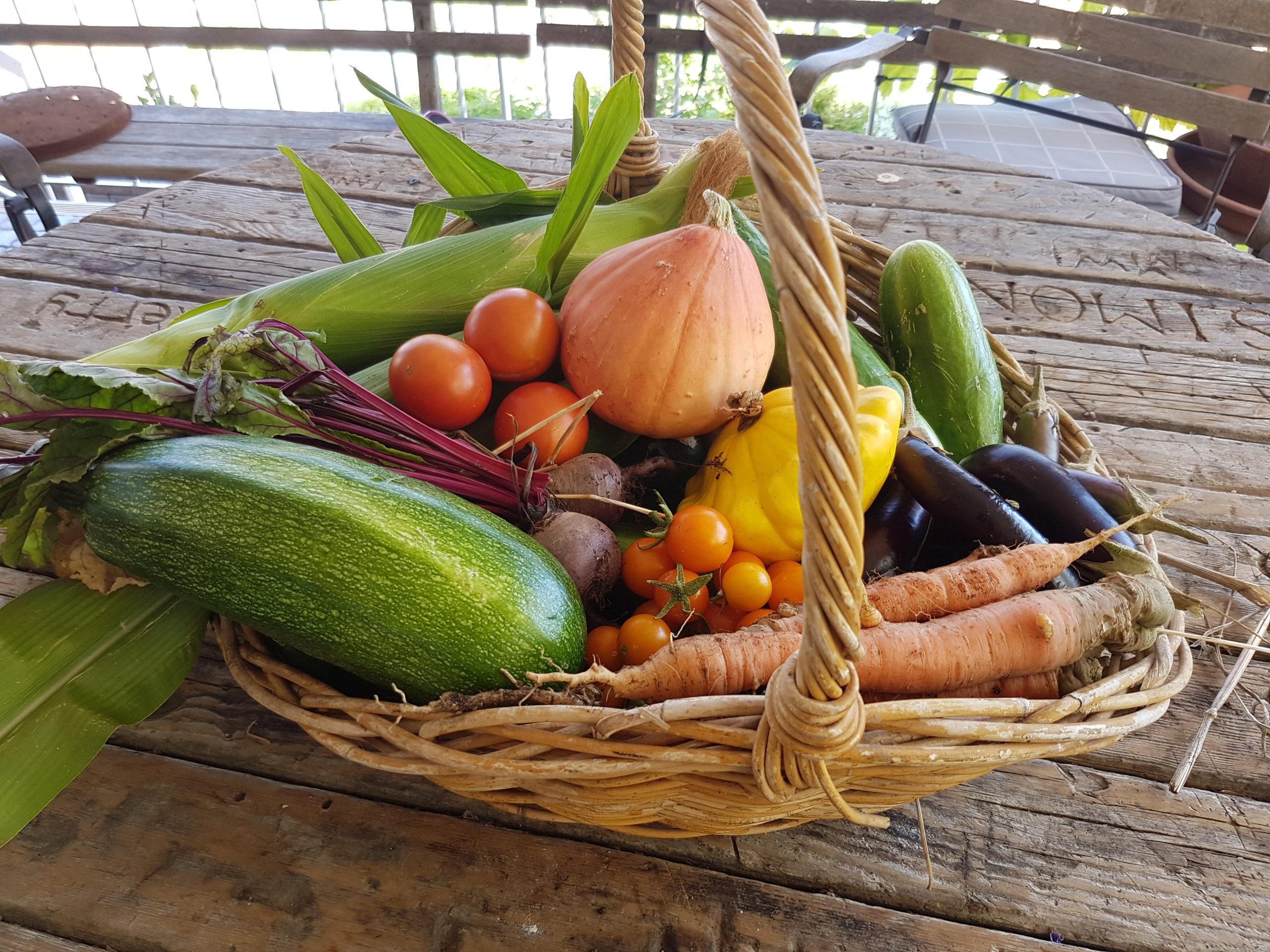 15 garden summer harvest (2)