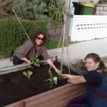 street plant up aug 09 (5)